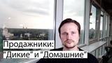 Продажники Дикие VS Домашние. Сергей Переведенцев