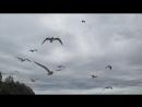 Птички не Хичкока, но преследуют также настойчиво и агрессивно