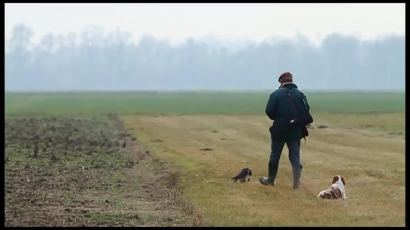 Hunting With Falcon goshawk Video Training - Falcon attack Bird of Prey