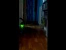 кот зомби, или просто мама включила фонарик на телефоне
