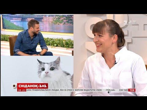 Як правильно купати котів поради ветеринара Вікторії Шерстюк