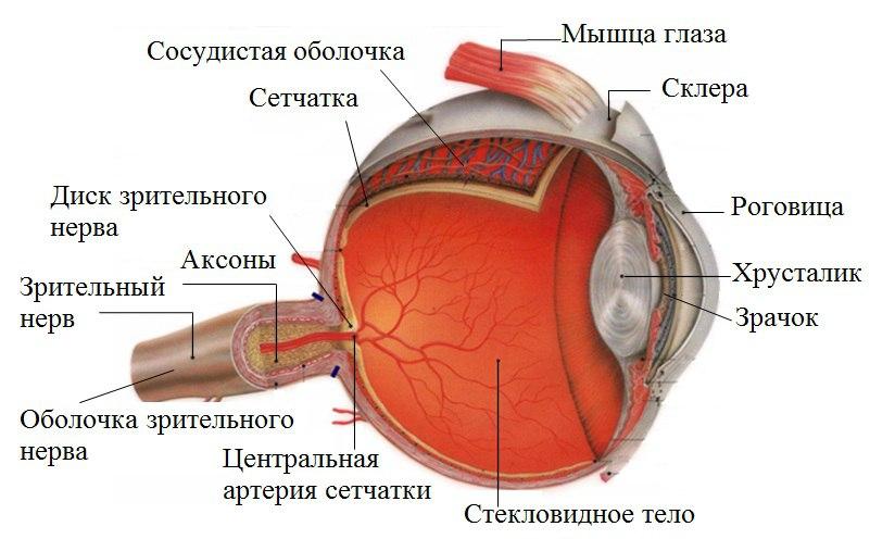 Человек с заболеванием зрительного нерва, не будет кандидатом на коррекцию лазерного зрения