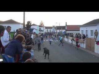 TOUROS E PANCADAS 🐂 🔴  VÍDEO ENGRAÇADO 🔴 Pegadinhas.silas - YouTube (720p)