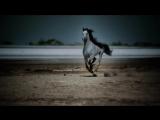Удивительные скачущие лошади./Amazing_Galloping_Horses_1080p_HD.