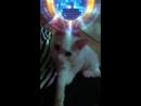 Что делает кот, когда нас нет дома😁🙈😸