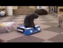 кот закрыл собрата в коробке