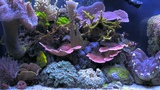 BluScenes Scenic Aquarium (Coral Reef tank) - NEW!