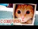 Приколы с котами с угарной озвучкой животных - Попробуй не засмеяться от PSO
