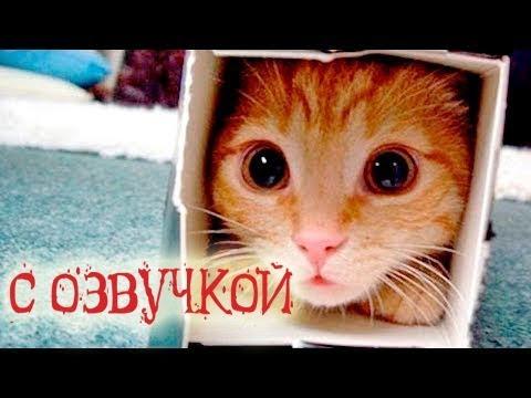 Приколы с котами с угарной озвучкой животных Попробуй не засмеяться от PSO