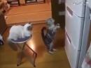 Холодильник ты могуч ты хранишь сосисок туч Не откажешь нам в ответе По сосиске мне и Феде