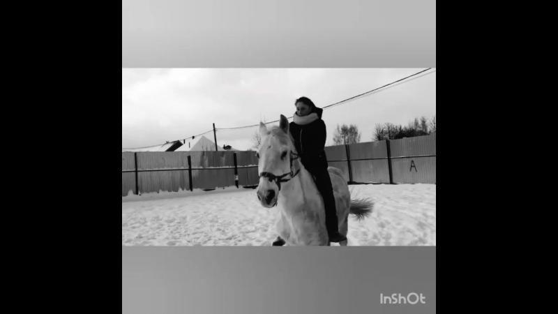 Будни на конюшне