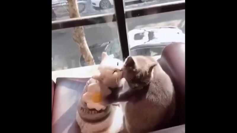 Кошачья любовь.........