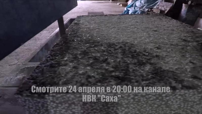 Передача про производство полистиробетона в Мохсоголлохе. 24.04.2018