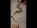 Змея 🐍