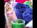 Пятница - Животные тоже хотят выпить