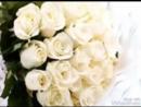 букет из белых роз А. Исенгазин и С. Яценко