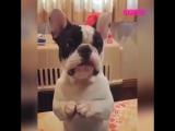 Очень очень милый пес