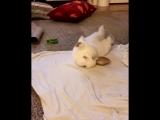 кролька кувыркается.mp4