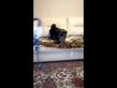 Научились залазить на диван)
