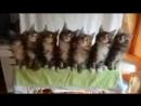 Поющие коты_low.mp4