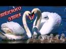 _DOBROE_UTRO krasivoe_muzykalnoe_video_s_pozhelaniyami_dobrogo_utra__(