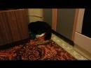 Томик и огурец И правда у всех котов такая реакция
