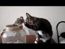 Дружелюбный кот