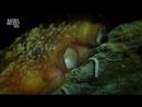 «Дикая Франция (10). Сокровища глубин» (Документальный, природа, животные, 2011)