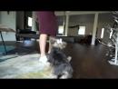 Our Pets Meet a Robotic Cat