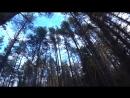 [Мир Охотника] Охота 169 загонная на кабана, а добыли волка