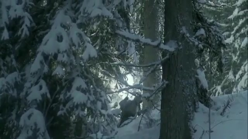 Короткометражный фильм о силе природы и ее любви к человеку