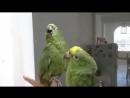 С подружкой в караоке!)) Пьяный дуэт попугаев!