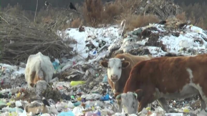 Защитник природы назвал ситуацию с мусором в Бичуре апокалипсисом