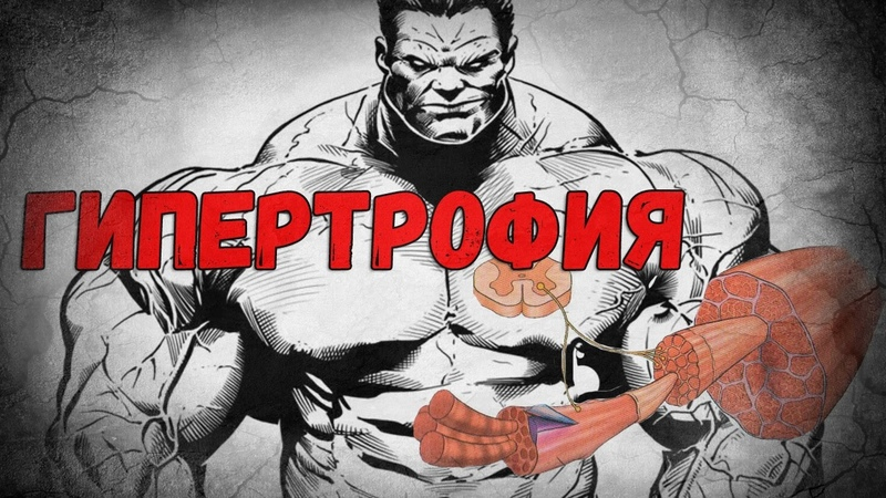 Как растут мышцы Гипертрофия rfr hfcnen vsiws ubgthnhjabz