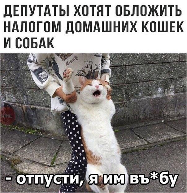 6AQBAe13Okc - Улетные гифки октября - заряд позитива!!!