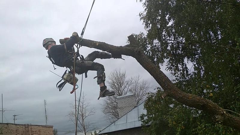 спилить дерево, валка сложных деревьев частями