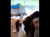Синди, мой личный парикмахер. 09.03.18