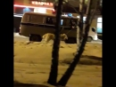 Свердловские полицейские поймали агрессивного алабая и везут его к ветеринару