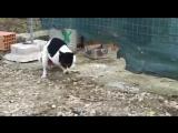 [v-s.mobi]Собака трахает курицу