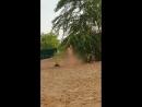 На ульяновском пляже нудиста сняли на видео
