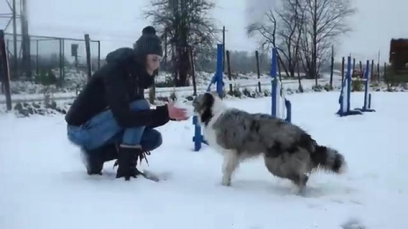 Border Collie Pup ♡ Fenna 8-9 months! ❄