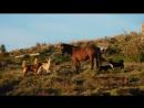 На острове Пасха полно бродячих собак и диких лошадей, которые чувствуют себя полноправными хозяевами.Целыми стаями довольно кр