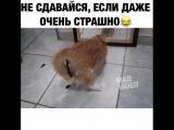 котячий адреналин)
