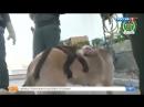 В Сети умиляются дружбе собаки и обезьянки