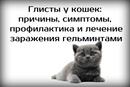 Хвостатый Копирайтер. Интересное о животных фото #7