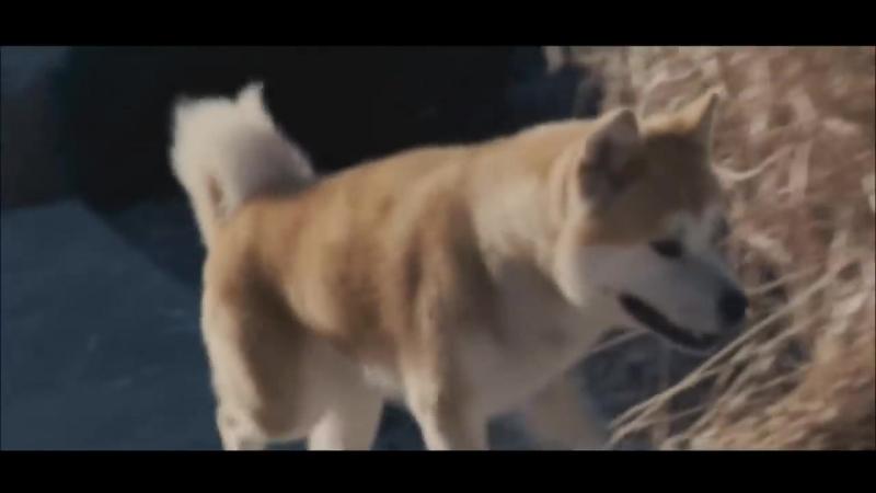 Хатико, такого вы еще не видели, самый красивый клип
