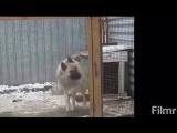 ШОК!!!!!Собака танцует под татарскую музыку.mp4