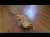 Безумный рокер рептилоид