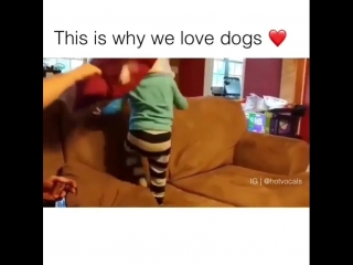 Why we love dogs 💓