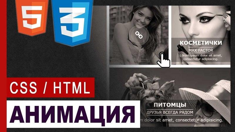 CSS3 Animation hover effect   Практика CSS / HTML5
